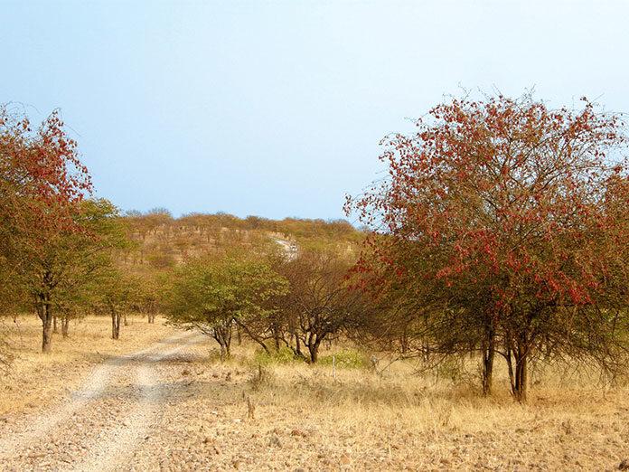 Wycieczki do Namibii