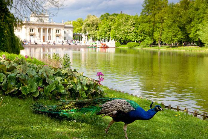 Przyroda w Warszawie – gdzie można zobaczyć dzikie zwierzęta?